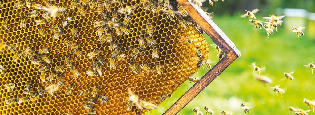 Abeilles cadre de miel