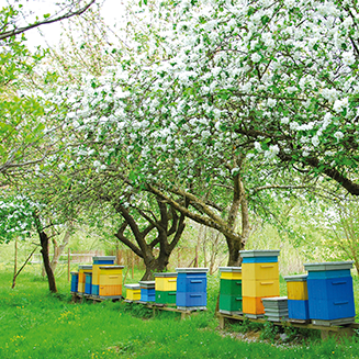 Des ruches dans un verger